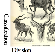 Classification and Division Papers