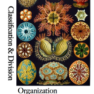 Classification and Division Papers: Organization