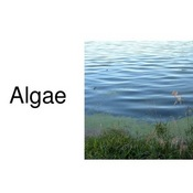 Plant Kingdom: Algae