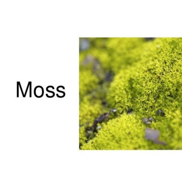 Plant Kingdom: Mosses