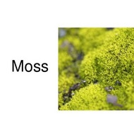 Plant Kingdom: Mosses