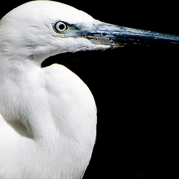 """What's a Girl to do?  Money, Power, and Conflict in Sarah Orne Jewett's """"A White Heron"""""""