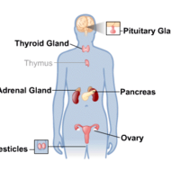 The Endocrine System: Unit 8