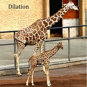 (2/20) 10-4 Dilations