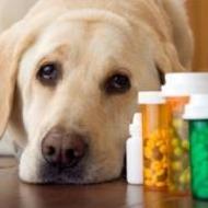 Unit B - Pharmacy and Laboratory Procedures