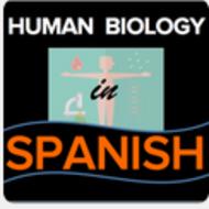 Homeostasis and Bone Remodeling/Homeostasis y remodelación óseo