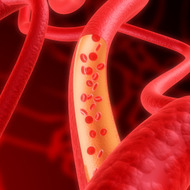 Introduction to Blood Vessels