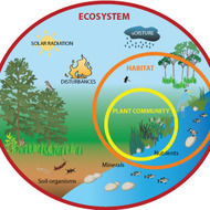 Ecosystems Online Activity