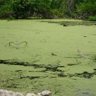 Microbes: Fungi and Algae