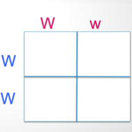 Unit 1: Introduction to Punnett Squares