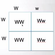 Unit 2: Solving Punnett Squares