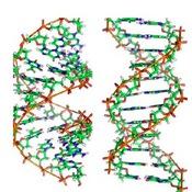 DNA vs RNA