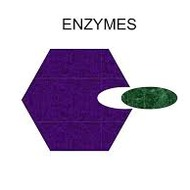2.4 Enzymes