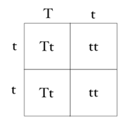 ... Pun T Square also with punnett square practice problems worksheet