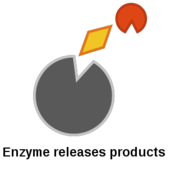 Structure and Function of Macromolecules: Enzymes