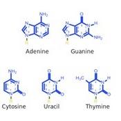 What is a macromolecule?