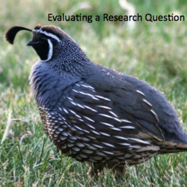 Evaluating a Research Question