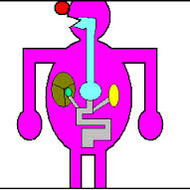 Human Body System: Digestive