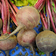 Lab:  Factors affecting a Beet Root Membrane