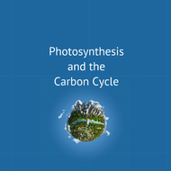 Photosynthesis and the Carbon Cycle