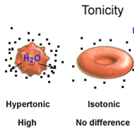 Isotonic, Hypertonic, Hypotonic Solutions