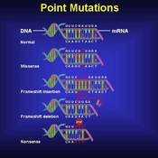 Mutations and Genetic Changes