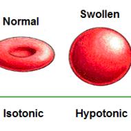 Isotonic, Hypotonic, & Hypertonic Solutions Tutorial | Sophia Learning