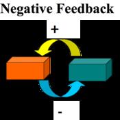 Negative Feedback & Thermoregulation