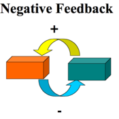 Negative Feedback & Thermoregulation