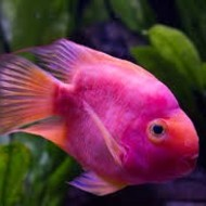 Animal Unit: Fish