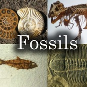 Fossils -- Evidence of the Past!