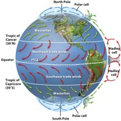 Chapter 4: Global Climates & Biomes - Lesson 2: Air Currents