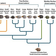 Chapter 5: Evolution of Biodiversity - Lesson 3: Speciation & Niches