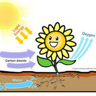 Photosynthesis - The Basics