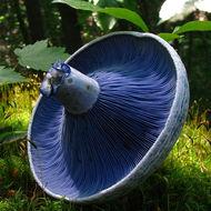Basic Plant & Fungi Biology