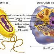 Prokaryotic vs. Eukaryotic cells