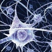 Nerves & Neurons
