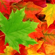 Leaf Pigment (OPTIONAL)