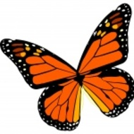 Let's Learn About the Butterfly's Life Cycle