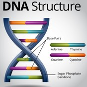 F07-01: DNA Introduction and Structure