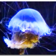 Porifera and Cnidaria