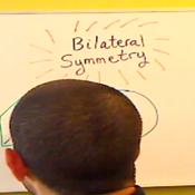 Identifying Bilateral Symmetry