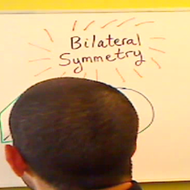 Identifying Bilateral Symmetry