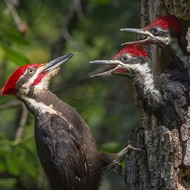 Chordata: Birds and Mammals