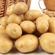 Tehnologija proizvodnje krompira
