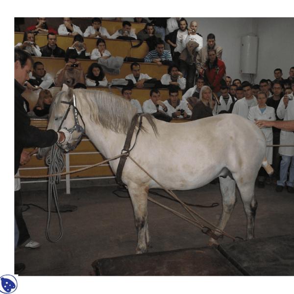 Fiksiranje i obaranje konja
