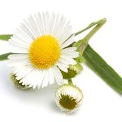 Uzroci kvarenja biljnih droga