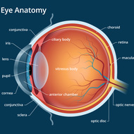 How your eye works