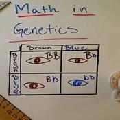 Math in Genetics