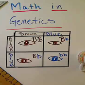 Math in Genetics